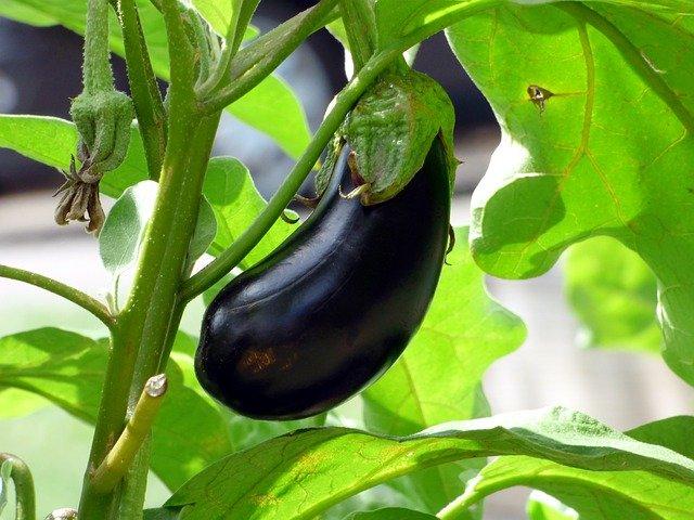 gnats vegetables